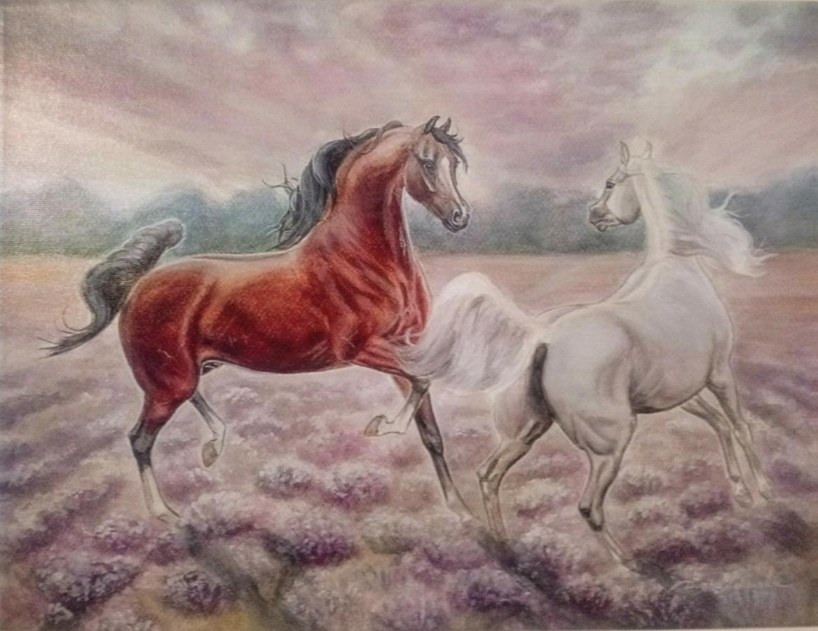 1 Obraz Konie Araby Na Płótnie Art Print Giclee Ogłoszenia Re